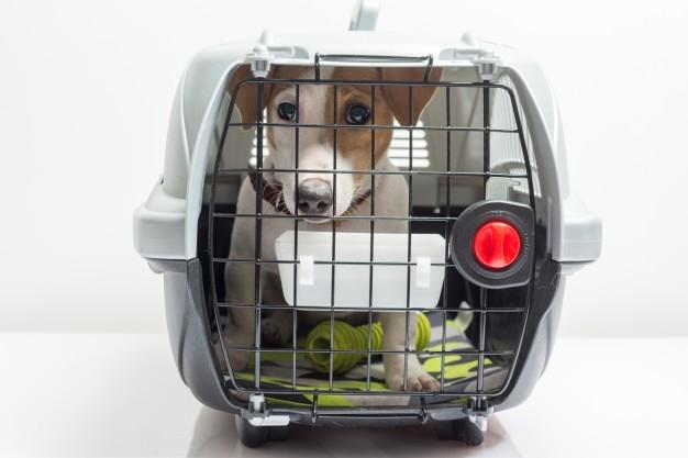Sådan transporterer du dine kæledyr sikkert rundt i verden